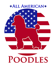 all-american-poodles-decoration